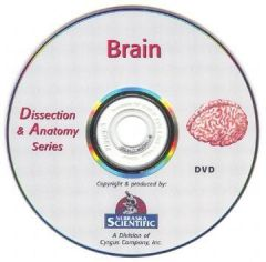 The Dissection & Anatomy of the Brain (DVD)