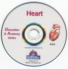 The Dissection & Anatomy of the Rat (DVD)